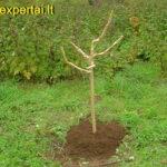 Ruošiame medžius žiemai