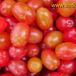 Geltonžiedės sedulos derlius