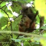 Voverės ir riešutai :-)